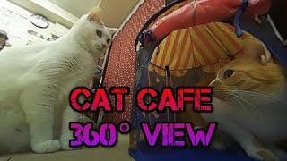 cute cat cafe tokyo japan 360° neko