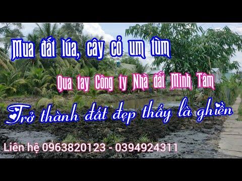 San lấp mặt bằng, làm hàng rào, trồng cây cho khách của Công ty Nhà đất Minh Tâm