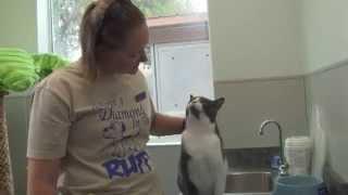 Мне Смешно Кот делает массаж хозяйке