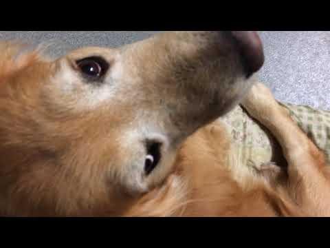 眠ってる愛犬にそっと「さんぽ」とつぶやいてみる