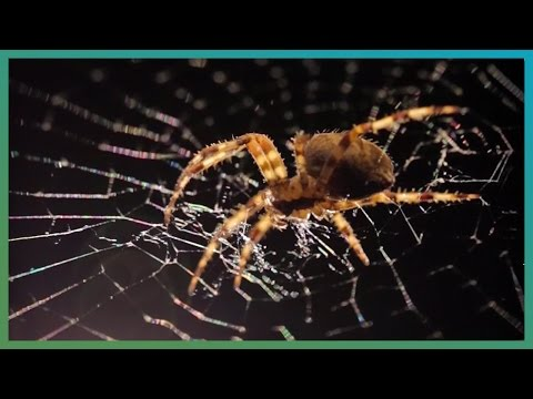 Spider Web Time-Lapse | Earth Unplugged