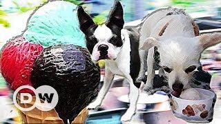 Это не прикол: собаки любят мороженое - и в одном немецком кафе четвероногим предлагают особый сорт