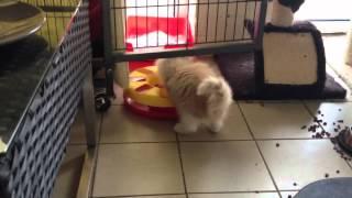 Marah en de cattrack
