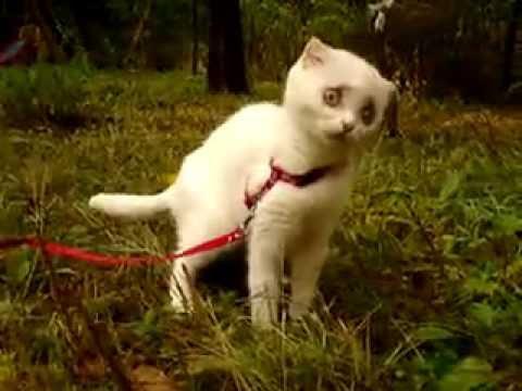 Кот ест траву/ cat eats grass