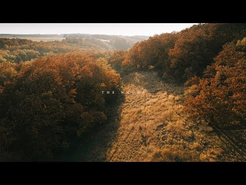 DMalou - A Short Story  - The Woods