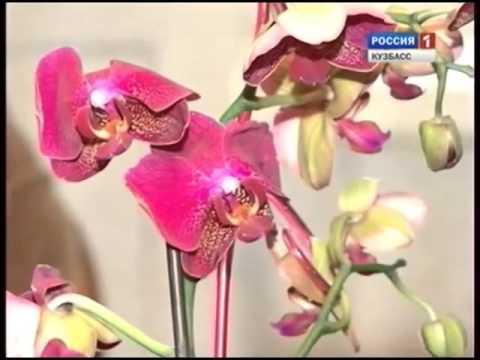 Уход за фаленопсис. Как вырастить здоровую орхидею