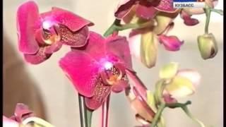 Орхидея: уход в домашних условиях. Как поливать орхидею?(Как ухаживать за орхидеей в домашних условиях? Как поливать орхедию? Подробнее здесь - http://lalend.ru/kak-ukhazhivat-za-orkh..., 2015-09-25T16:22:14.000Z)
