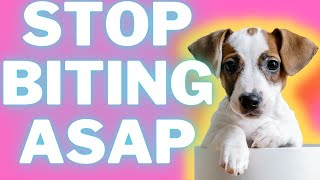Biting and Nipping With Jack Russell Terriers: How To Stop It + Tips (#terrierowner)