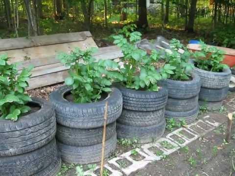 Potato Tire Update1 Avi