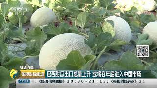 [国际财经报道]投资消费 巴西甜瓜出口总量上升 或将在年底进入中国市场| CCTV财经