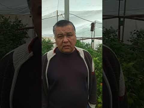 Фермер-новатор Манат Тансикбаев из Казыгуртского р-на ЮКО о своём Лимонарии