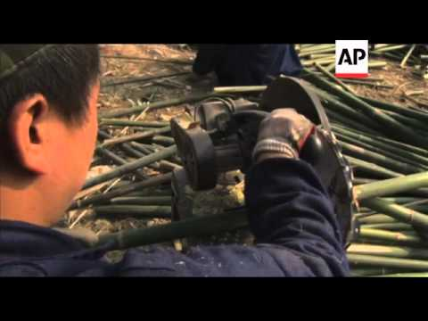 China moves to develop bamboo industry