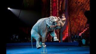 Детей из многодетных семей пригласили в Алматинский цирк (04.06.19)