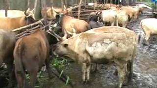 Projet Dexportation de la viande bovine et des boeuf de la republique de guinee pour le moyen orient