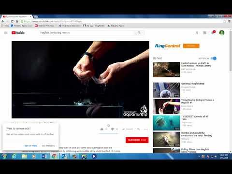 hagfish slime video