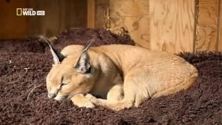 Странная дружба животных  Самые невероятные друзья