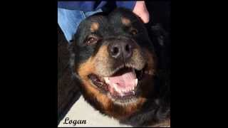 Logan Is Looking For His Forever Home