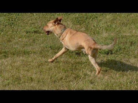 Deuce The Wonder Dog: Inspiration On Two Legs