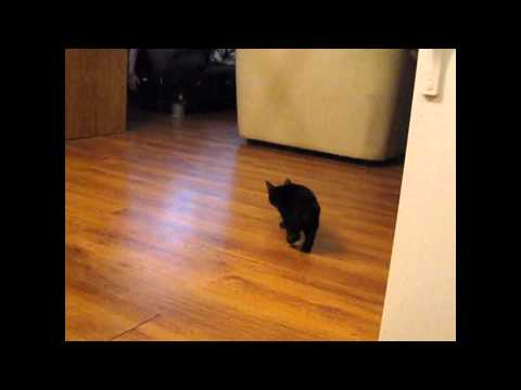 0 Conheça o Gato Barra de Carregamento do Youtube