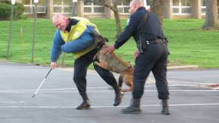 Wilmington Police K-9 Unit Demonstration - Police Dog Kai
