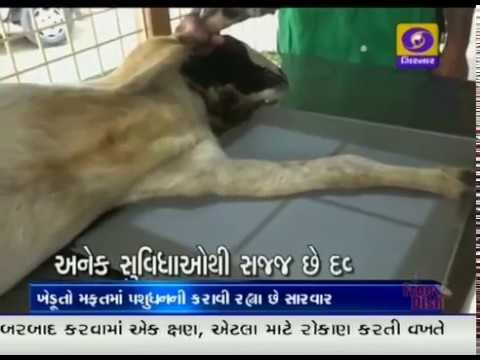 Free Animal Treatment | Anand | Ground Report Gujarati