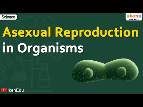 Asexual Reproduction in Organisms