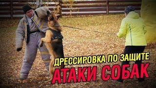 Дрессировка по защите | Красивые атаки собак