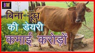 बिना दूध की गोशाला 12 महिने करोड़ों कमाई का नया तरीका : Business Mantra