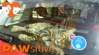 Lonely Street Cat Breaks Into Car To Find A Loving Home