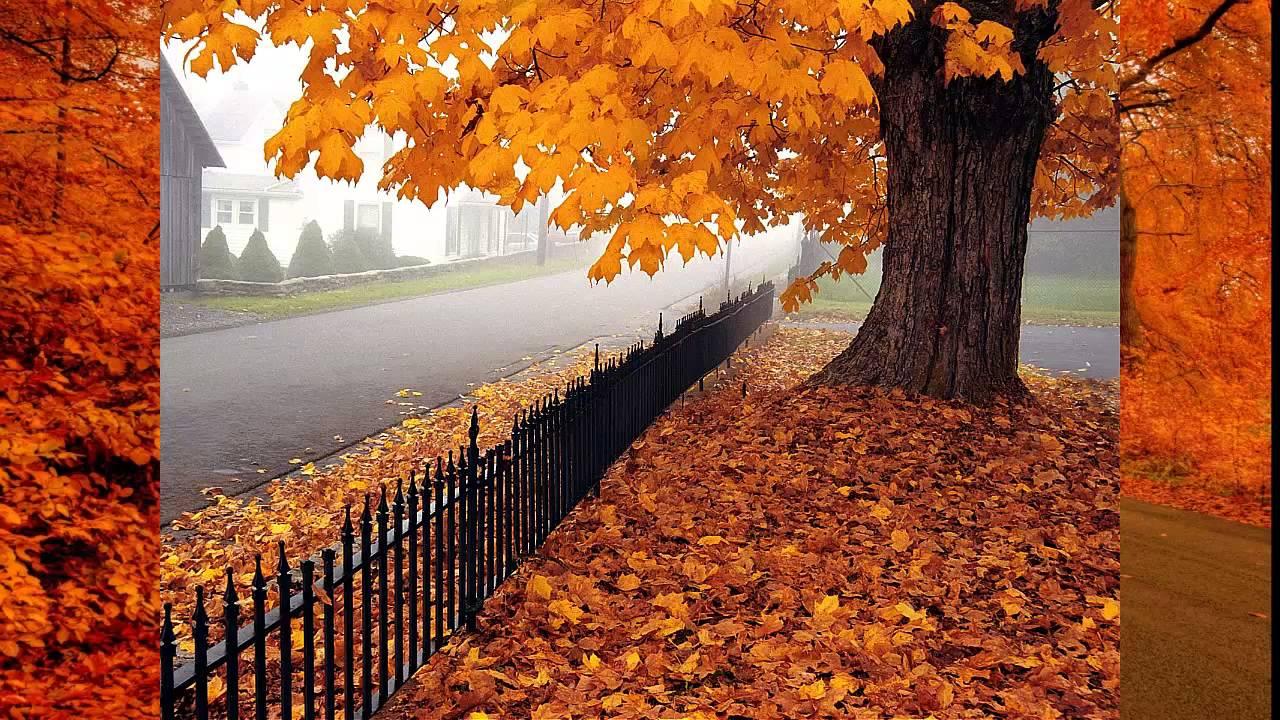 Beautiful Fall Wallpapers For Desktop Video Del Oto 241 O Con Musica De Keane Youtube