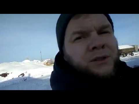 Быки калмыцкой породы Всероссийская выставка овец г. Элиста - YouTube
