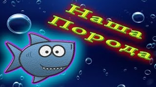 Аквариумная рыбка Барбус двухточечный
