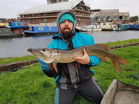 Pike On The Dead Bait At Aire & Calder Canal