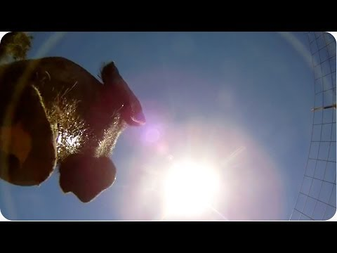 It's Raining GoPros! | INCREDIBLE Camera Falls From Plane to Pig Pen