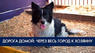 Потерявшийся пес нашел своего хозяина! Фонд Умка