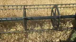 12 Июля 2018 уборка пшеницы