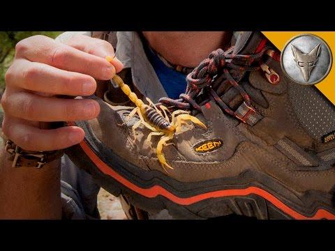 Scorpion Hiding in My Boot!