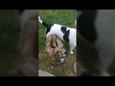 Washington Dog Rescue - ADOPTIONS - Rescue Me!