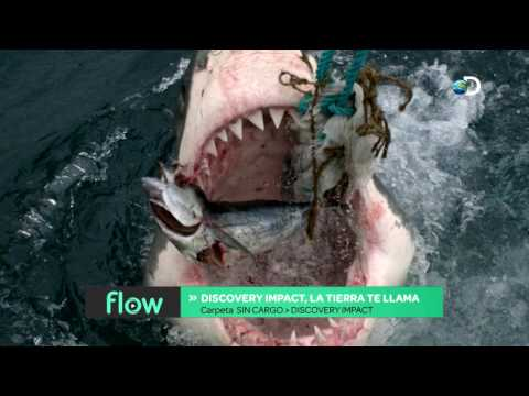 Flow - Discovery Impact
