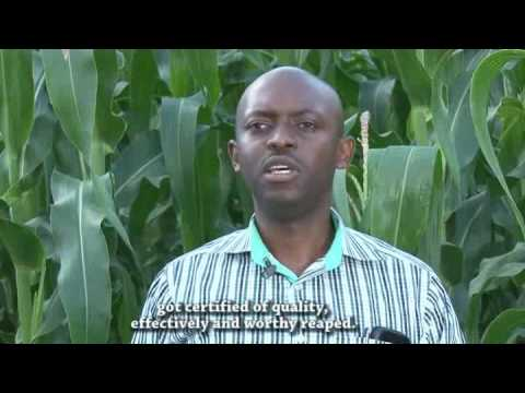 Maize and Soybean value chain development in Kamonyi