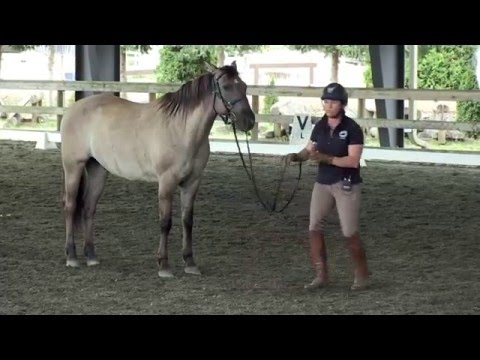 Jody Hartstone - Using Equitation Science in Starting Young Horses