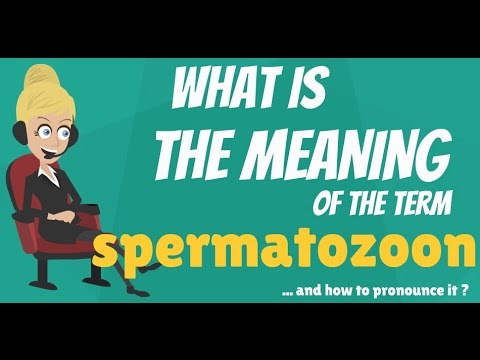 What is SPERMATOZOON? What does SPERMATOZOON mean? SPERMATOZOON meaning & explanation