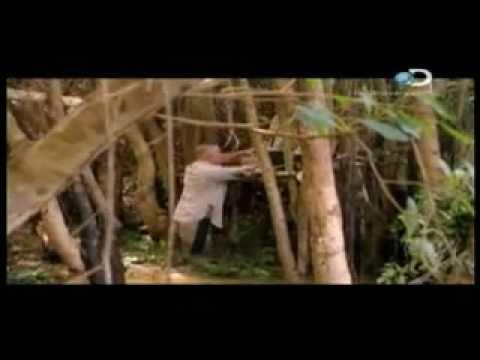 Desafio x 2: En el Pantanal - 1 / 5