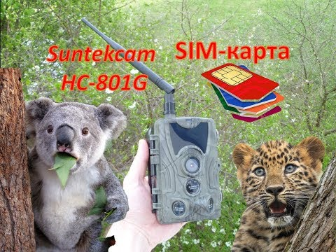 Фотоловушка(Trail Camera) Suntekcam HC-801G с SIM-картой 3G.SMS/MMS/SMTP. Обзор и тест