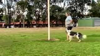 Sisko And Irma Training Left And Right Side Heeling