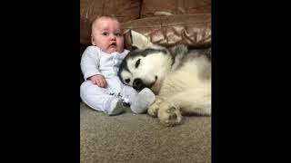 Best Dog Compilation NEW Cute Dogs and Cats Doing Funny Things 2018 BA112Relax