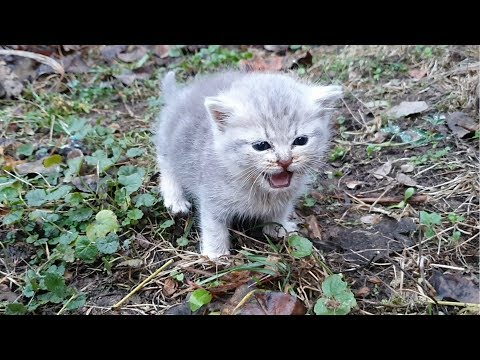 Feeding and warming a weak street kitten / rescue in our life