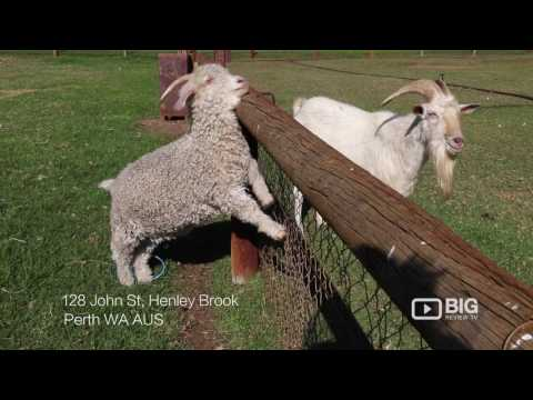Swan Valley Cuddly Animal Farm, a Tourist Attractions in Perth for Excursion or for Field Trip