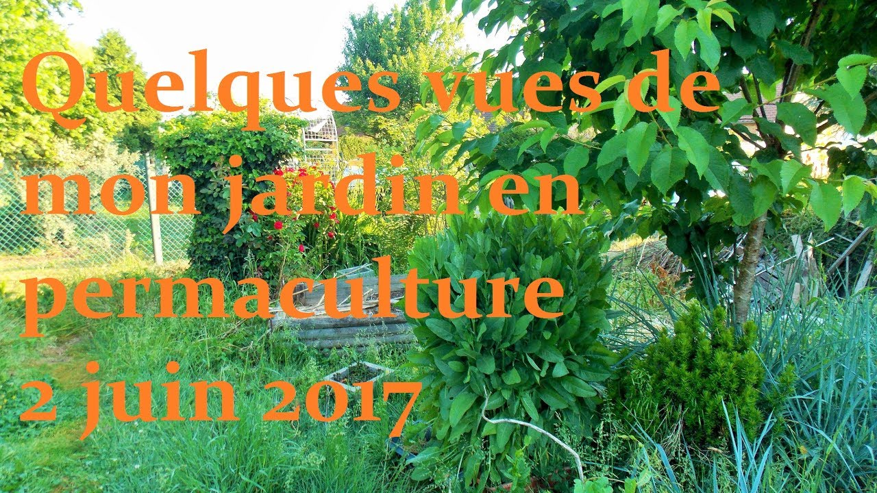 quelques vues de mon jardin en permaculture 2 juin 2017 youtube. Black Bedroom Furniture Sets. Home Design Ideas