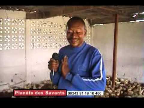L'IMPORTANCE DE L'AGRICULTURE POUR UN PAYS COMME LE CONGO